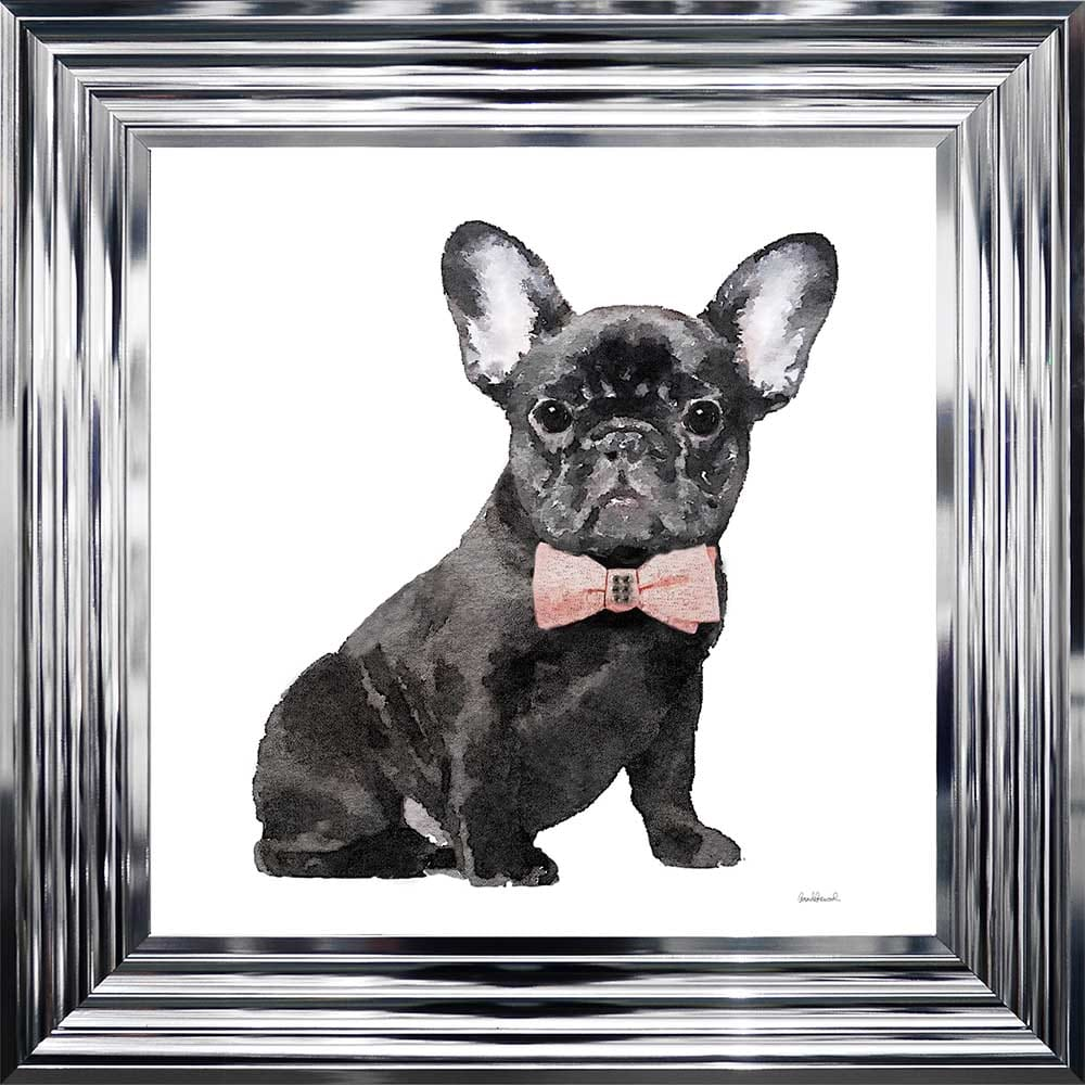 Black Frenchie Framed Picture