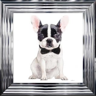 White And Black Frenchie Framed Picture